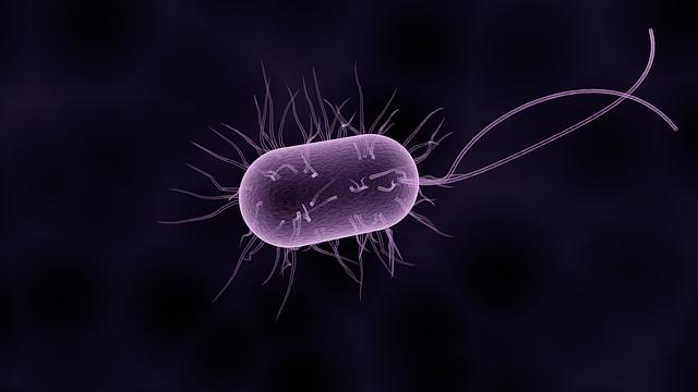 Bactérie composant le microbiote intestinal.