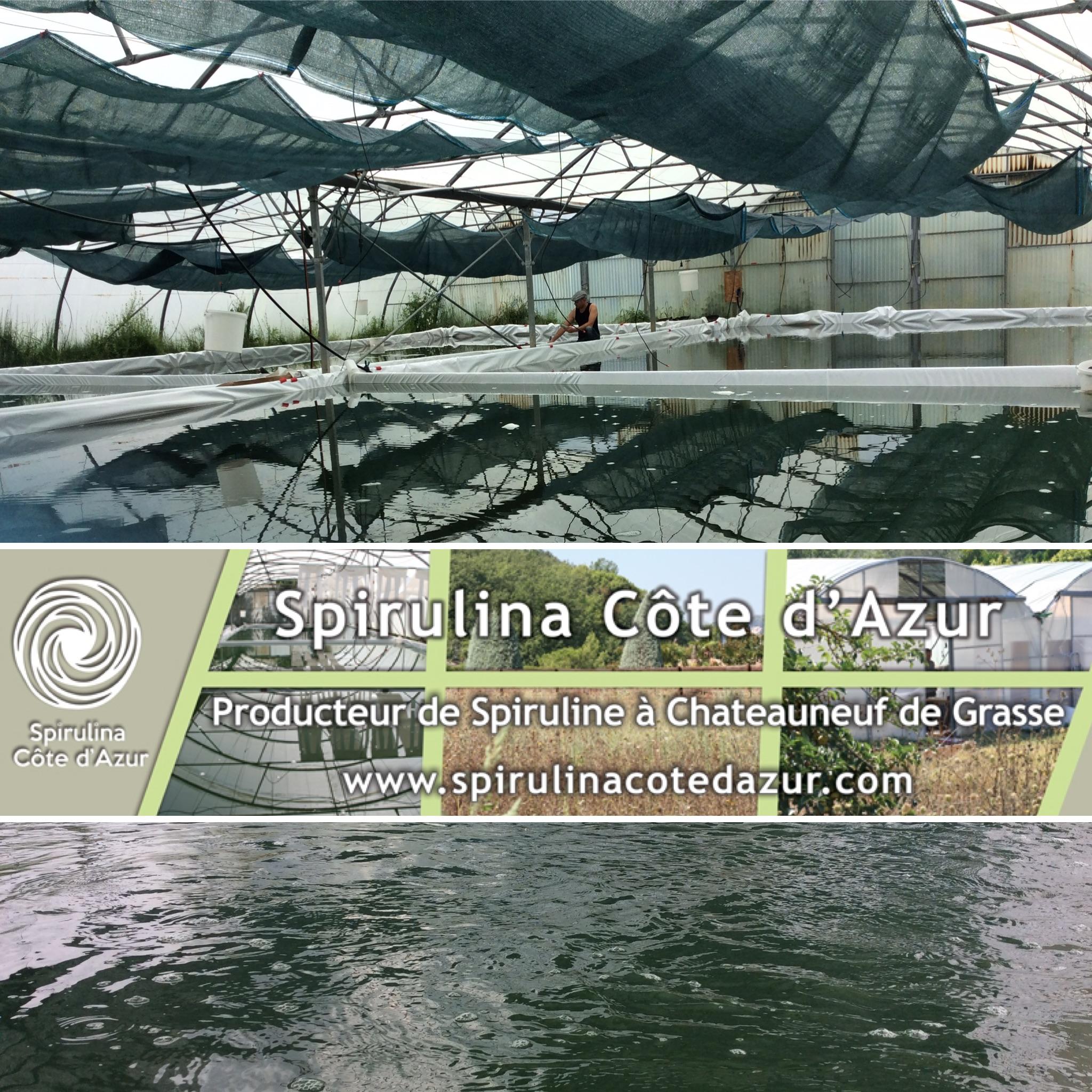 Photographie de l'exploitation agricole de spiruline Spirulina Côte d'Azur.